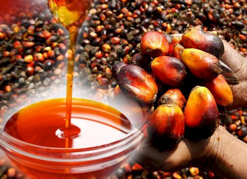 Unlicensed palm oil operators to face the law by next year